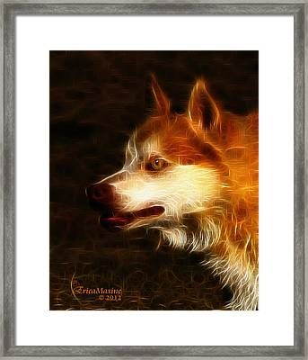 Wolf Or Husky - First Place Win In 'angry Dog Contest' Framed Print by EricaMaxine  Price