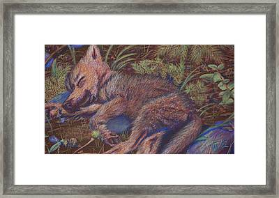 Wolf Pup Napping Framed Print by Thomas Maynard