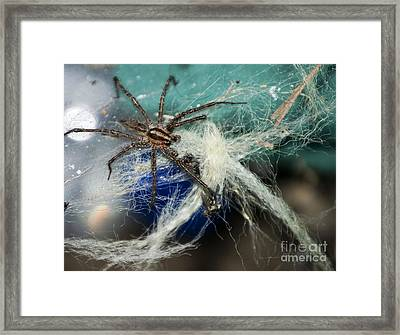 Wolf Spider Eating Framed Print by Art Hill Studios