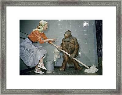 Woman Communicates With Orangutan Framed Print by B. A. Stewart And David S. Boyer
