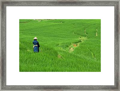 Woman Looking Over Valley Of Rice Outside Sapa Framed Print