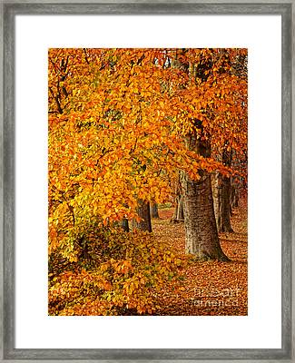 Wonderful Autumn Framed Print by Lutz Baar