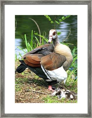 Wonderful Mom Framed Print by Valia Bradshaw