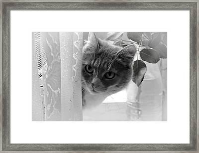Wondering. Kitty Time Framed Print by Jenny Rainbow