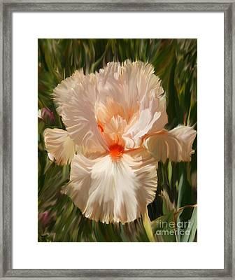 Wonderous Iris Framed Print by Diane E Berry