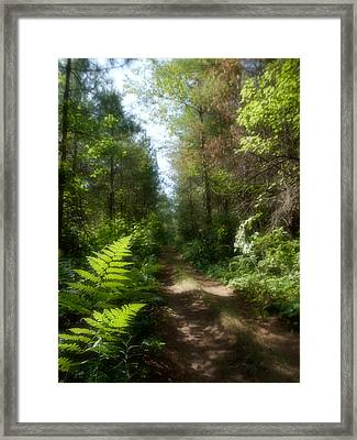 Wondrous Path Framed Print by Yves Pelletier