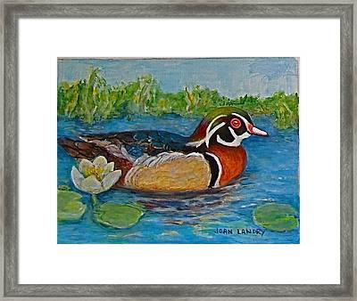 Wood Duck Framed Print by Joan Landry