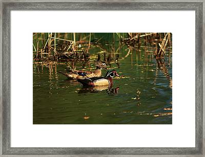 Framed Print featuring the photograph Wood Duck Pair by Josef Pittner