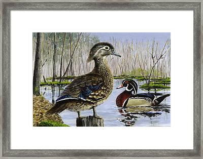 Wood Duck Framed Print by Paul Gardner