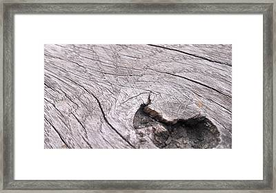 Wood Framed Print by Ernestas Papinigis