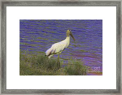Wood Stork By The Pond Framed Print by Deborah Benoit