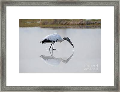 Framed Print featuring the photograph Wood Stork Eating by Dan Friend