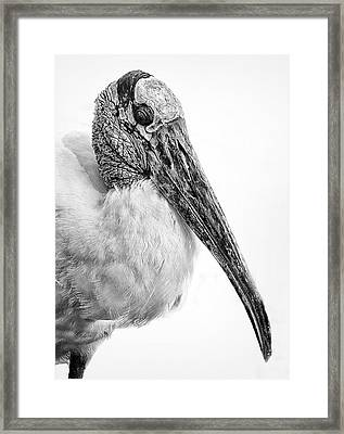 Wood Stork Framed Print by Ercole Gaudioso