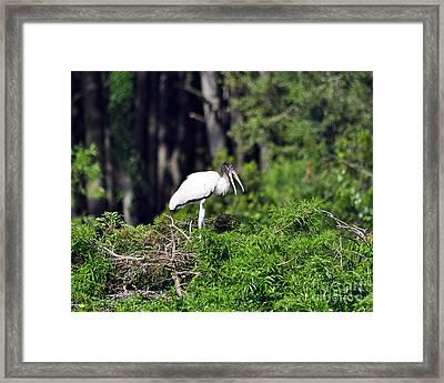 Wood Stork Juvenile Framed Print