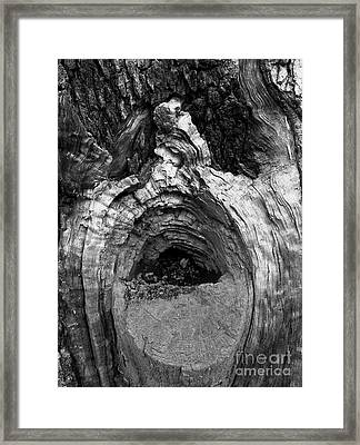 Wood You Smile  Framed Print by Trish Hale