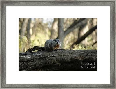 Woodchuck Framed Print by Yumi Johnson