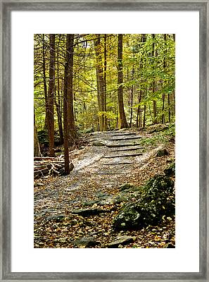 Wooded Stairway Framed Print