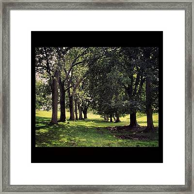 Wooded Trail  #tree #pathway #grass Framed Print