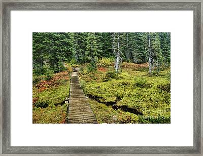 Wooden Foot Bridge Over Stream Framed Print by Ned Frisk