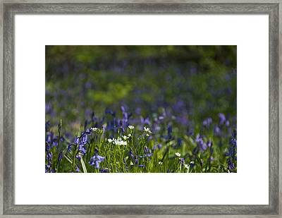 Framed Print featuring the photograph Woodland Flowers by Trevor Chriss