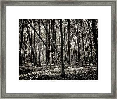 Woodland Framed Print by Lourry Legarde