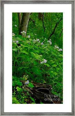 Woodland Paradise Framed Print by Julie Clements