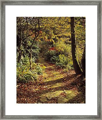 Woodland Path, Mount Stewart, Ards Framed Print by The Irish Image Collection