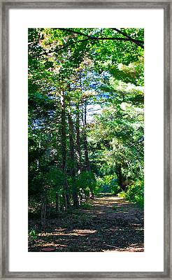 Woodland Path Framed Print