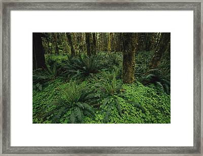 Woodland Rain Forest View With Mosses Framed Print by Melissa Farlow