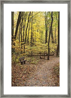 Woodland Respite Framed Print