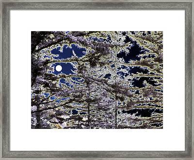 Woodland Solitude Framed Print by Will Borden