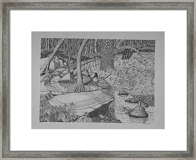Woodland Stream Framed Print by Daniel Reed