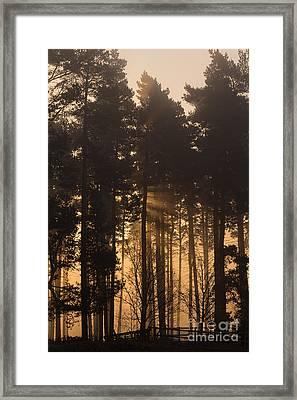 Woodland Sunrise Framed Print