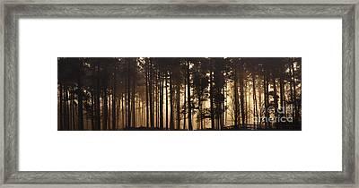 Woodland Sunrise Panorama Framed Print
