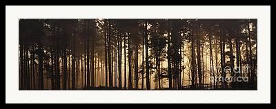 Cannock Chase Framed Prints