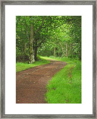 Framed Print featuring the photograph Woodland Track by Martin Blakeley