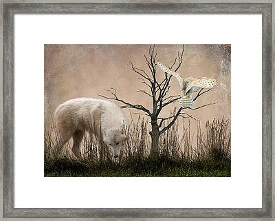 Woodland Wolf Framed Print by Sharon Lisa Clarke