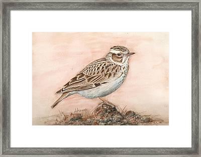 Woodlark In The Day-break Framed Print by Deak Attila