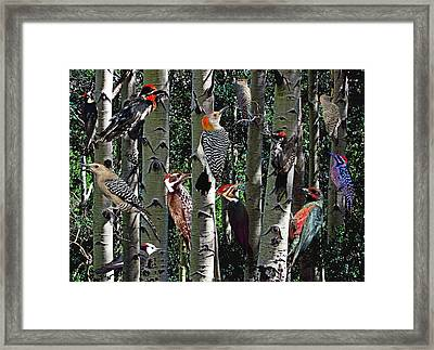 Woodpecker Collage Framed Print by David Salter
