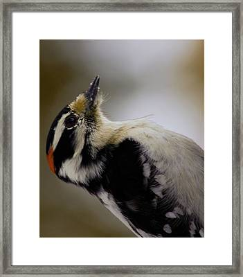 Framed Print featuring the photograph Woody by Josef Pittner