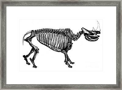 Woolly Rhino, Cenozoic Mammal Framed Print