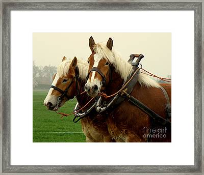 Framed Print featuring the photograph Work Horses by Lainie Wrightson