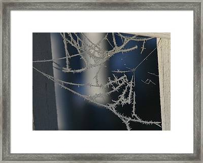 Framed Print featuring the photograph Work Of Spider And Winter by Paula Tohline Calhoun