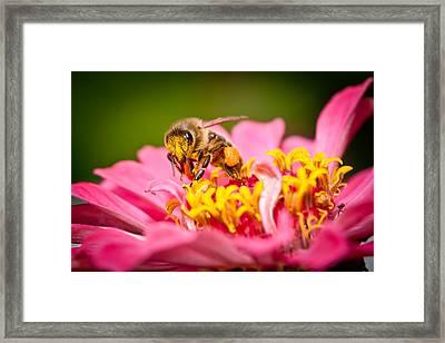 Worker Bee Framed Print