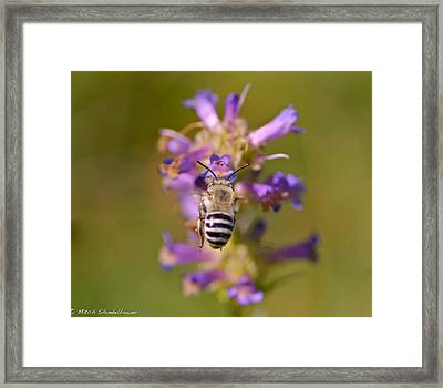 Framed Print featuring the photograph Worker Bee by Mitch Shindelbower