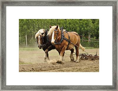 Working Horse Framed Print by Conny Sjostrom