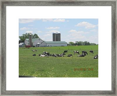 Working Milk Farm Framed Print by Tina M Wenger