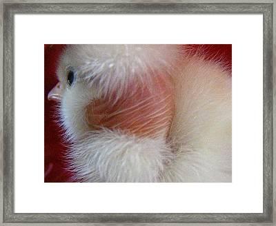 Framed Print featuring the photograph Worried  by Bogdan Floridana Oana