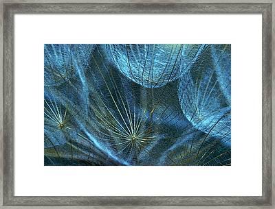 Woven Webs Framed Print