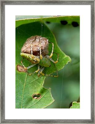 Wrappin Itup Framed Print by Beverly Hammond